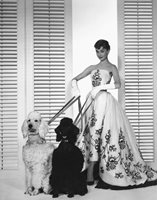 AUDREY HEPBURN 8x10 PICTURE IN DRESS + 2 POODLES PHOTO