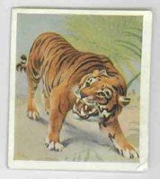 Godfrey Phillips Animal Studies 1936 26 Cheeta No