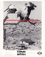 Original Photo Hawmps 1976 Turkey Vulture Mascot