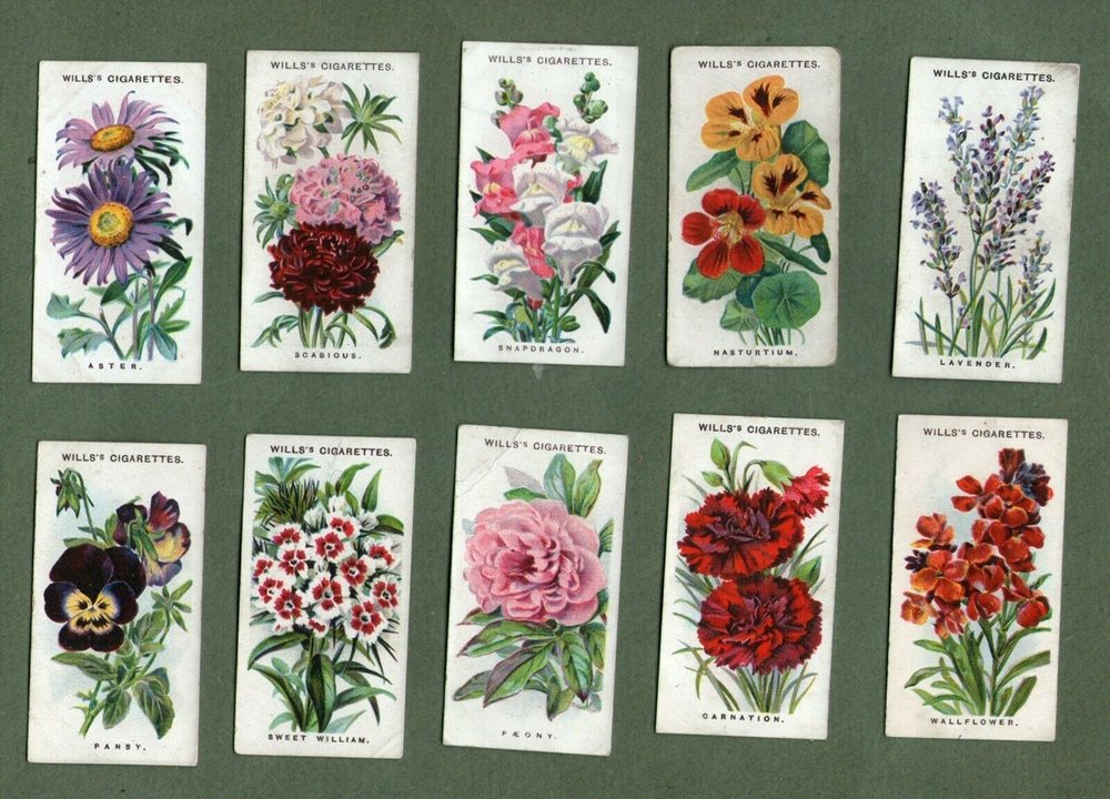 Tobacco Cigarette Cards Old English Garden Flowers Lave